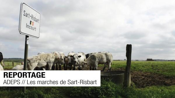 REPORTAGE // ADEPS // Les marches de Sart-Risbart